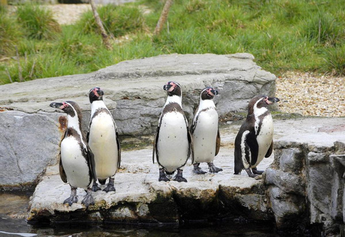 Uitvaart in de dierentuin