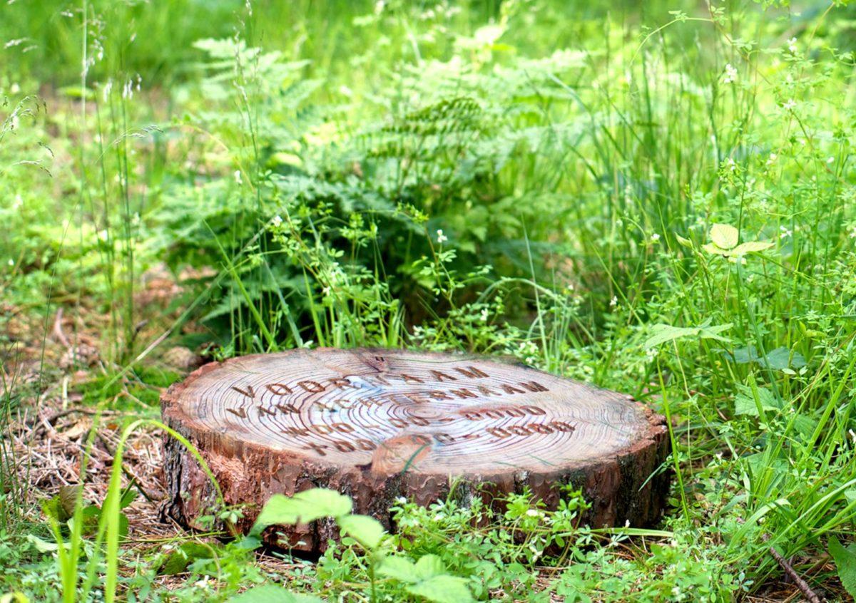 Toeval op natuurbegraafplaats Heidepol. Of toch ni...